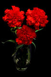 Three red carnations Royalty Free Stock Image