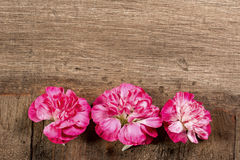 Three Red Carnations in a Row Royalty Free Stock Photography