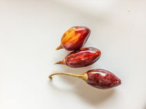 Three red cascabel chiles Royalty Free Stock Image