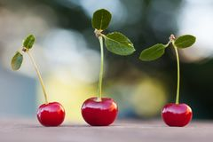 Three 3 red cherry berries with green leaf. Ripe cherries fruit macro view photo. Selective focus, shallow depth of. Field. Beautiful bokeh background Stock Photo