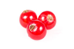 Three red currants isolated on white background Royalty Free Stock Image
