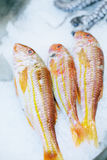 Three red fishes in ice. Three red fresh fishes in ice on store shelf Stock Photo