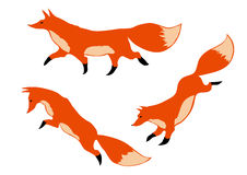 Three red foxes Stock Photo