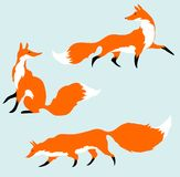Three red foxes Royalty Free Stock Image
