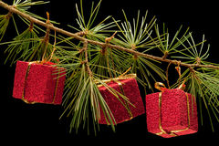 Three red gift boxes on pine branch Stock Photo