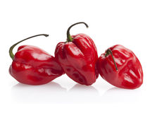 Three red habanero chili peppers royalty free stock photo