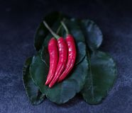 Three red hot chili pepper royalty free stock image
