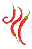 Three red hot chili peppers. Isolated on the white background Stock Photography