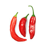 Three red hot chili peppers on white Stock Image