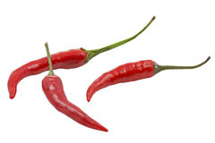 Three red hot chilies. Isolated on white background Stock Photo