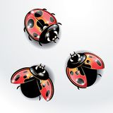 Three red ladybugs. Royalty Free Stock Image