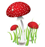 Three red mushrooms Stock Images