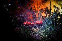 Mushroom. Fantasy Glowing Mushrooms in mystery dark forest close-up. Amanita muscaria, Fly Agaric in moss in forest. Magic mushroo stock photos