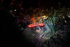 Mushroom. Fantasy Glowing Mushrooms in mystery dark forest close-up. Amanita muscaria, Fly Agaric in moss in forest. Magic mushroo Royalty Free Stock Photos