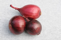 Three Red Onion Bulbs. On gray background Royalty Free Stock Images