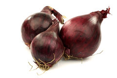 Three red onions Royalty Free Stock Photography