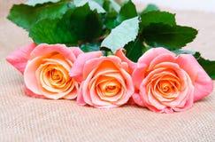 Three red-orange rose. On the sacking stock photo