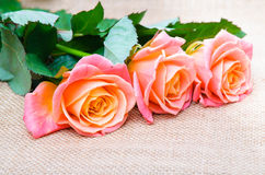 Three red-orange rose on the sacking. Three beautiful red-orange rose on the sacking Royalty Free Stock Photo