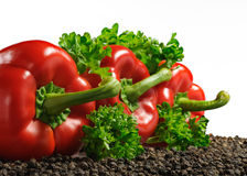 Three red paprika Royalty Free Stock Images