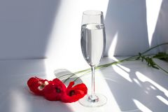 Three red poppies flowers on white table with contrast sun light and shadows and wine glass with water close. Three red poppy flowers on white table with stock image
