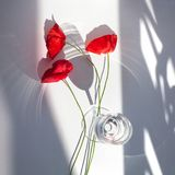 Three red poppy flowers on white table with contrast sun light and shadows and wine glass with water closeup top view. Three red poppy flowers on white table royalty free stock photography