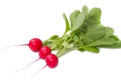 Three red radish Royalty Free Stock Photo