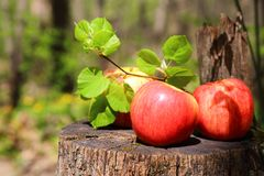 Three red ripe juicy apples lie on a wooden stump with a lime tr Stock Photo