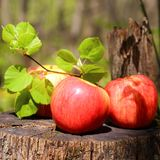 Three red ripe juicy apples lie on a wooden stump with a lime tr stock photography