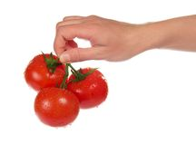 Three red ripe tomatoes with tails in female hand Stock Photo