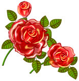 Three red rose Royalty Free Stock Images