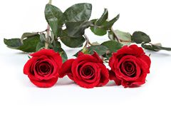 Three red roses Royalty Free Stock Photos