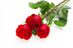 Three red roses. With stem on white background Royalty Free Stock Photo