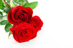 Three red roses. With stem on white background Royalty Free Stock Image