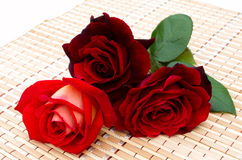 Three red roses Stock Photos