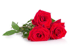 Three red roses. Three beautiful red roses isolated Stock Photos