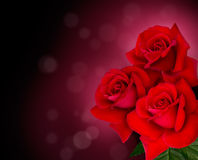 Three red roses are on black background Stock Photo