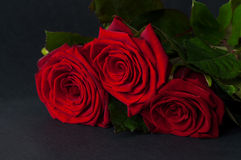 Three red roses on a black background. Stock Photos