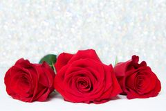 Three Red Roses with boke Background. copy space - Valentines and 8 March Mother Women's Day concept. Three Red Roses with boke Background. copy space royalty free stock photo