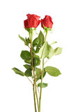 Three red roses composition. Isolated over the white background Royalty Free Stock Photos