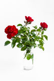 Three red roses in glass bottle isolated on white background Royalty Free Stock Photos