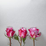The Three red roses on a gray background Stock Photography