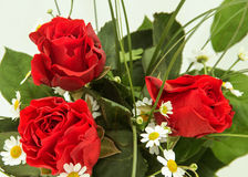 Three red roses with green leaves and chamomile. Top place for the signature; white background; isolated Royalty Free Stock Photos