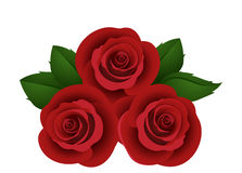 Three vector red roses. Stock Images