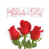 Valentines Day card with red roses. Three red roses ion a white background. Calligraphic red text Valentines Day. Vector Photo realistic delicate flowers Royalty Free Stock Images