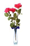 Three red roses isolated hite Royalty Free Stock Photos