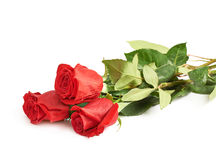 Three red roses isolated Stock Images