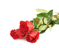 Three red roses isolated Royalty Free Stock Photography