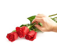 Three red roses isolated Stock Photos