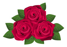 Three red roses isolated on a white background. Stock Photography