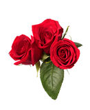 Three red roses Royalty Free Stock Photo